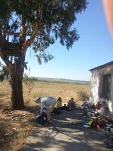 Lunch under an Australian gum tree