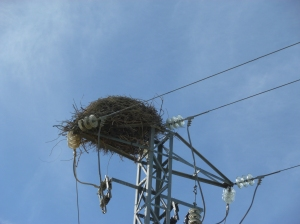 Usually stork nests are on churches but today I saw one on a power pylon
