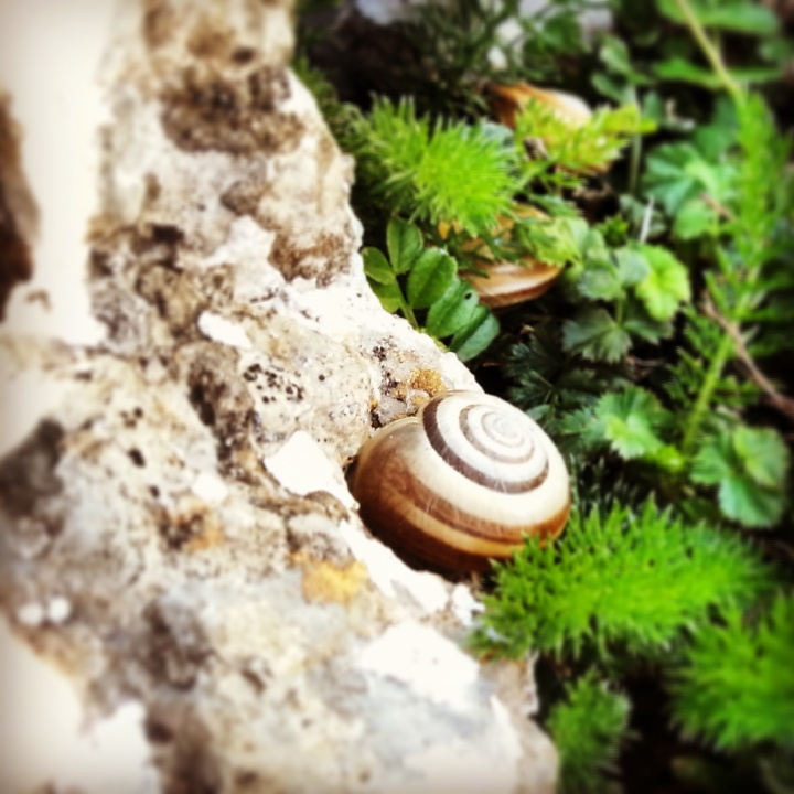 A snail on the trail
